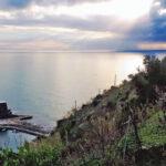 Il Foresto di Vernazza: nuova forza per la viticoltura alle Cinque Terre